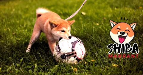 Shiba Inu Football