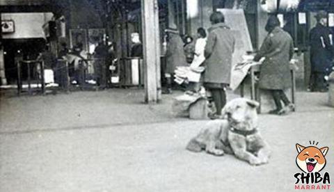 Hatchiko à la gare